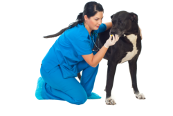 veterinary giving medicine to a dog
